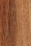 Walnut - example of walnut tree wood